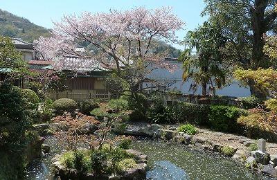 相生公民館の桜P1130221.jpg